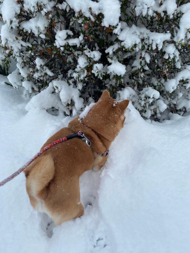 雪 今朝の様子